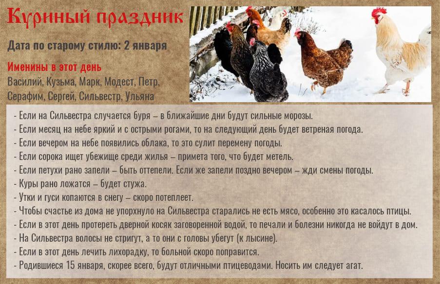 15 января — Куриный праздник