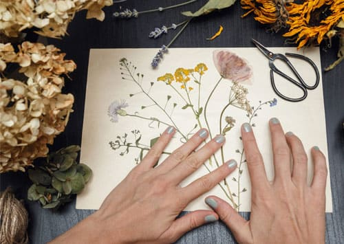 Как сделать гербарий из листьев и цветов