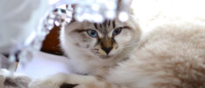 К чему снятся кошки (черные, белые, рыжие и так далее) — толкование сна по различным сонникам