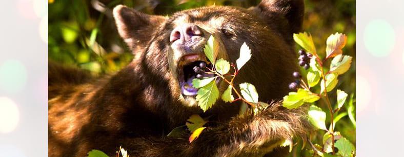 К чему снится медведь — различные толкования сна | Видеть во сне медведя (бурого, белого), убегать от него