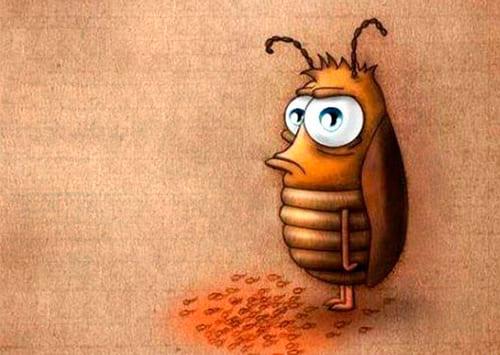 К чему снятся тараканы женщине и мужчине – сонник