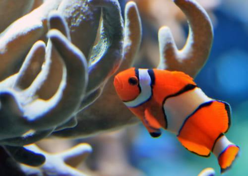 К чему снится живая рыба? Сонник живая рыба во сне