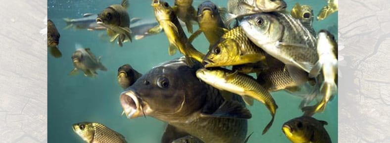 Детально разбираем, к чему снится рыба — толкование сна в различных сонниках | Увидеть во сне рыбу, к чему это?